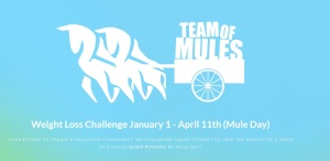 teamofmules