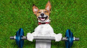 fitness-dog-smiling_h